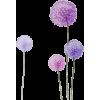 dandelion - Plantas -