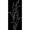 Florals - Ilustracije -