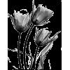 Florals - Plants -