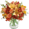 day lily - Rastline -