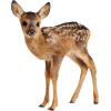 deer, fawn - Animals -