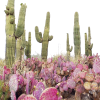 desert cactus photography - Nature -