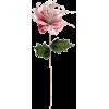 Plants - Piante -