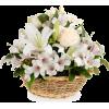 dks - 植物 -