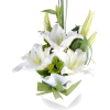 dks - Pflanzen -