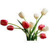 dks - Plants -