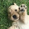 dog - My photos -