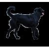 dog - Items -