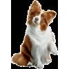 dog brown white - Živali -