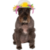 dog with party hat - Zwierzęta - $11.95  ~ 10.26€