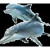 dolphins - Animali -