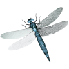 dragonfly - Animals -