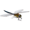 dragonfly - Animales -