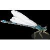 dragonfly - 动物 -