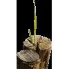 drbo - Plants -