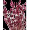 dry grass - Растения -