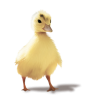 duck - Animals -
