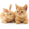 easter - Animals -