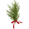 evergreen branch - Przedmioty -