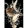 fairy bird - Animals -