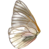 fairy wings 2 - Uncategorized -