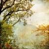 fall - 背景 -