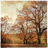 fall - Background -