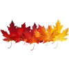 fall - Piante -