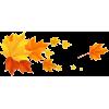 fall - Biljke -