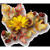 fall - Pflanzen -