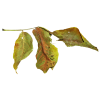 fall leaves - Items -