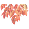 fall leaves - Plants -