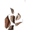 fall leaves - Illustrations -