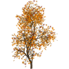 fall tree - Items -