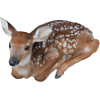 fawn  - Animals -