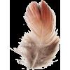 feather - Predmeti -