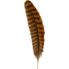 feather - Natura -