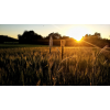 field - Background -