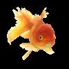 fish - Animals -