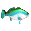 Fish Green - Animals -