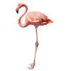flamingo - Animali -