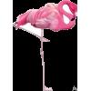 flamingo - Illustrazioni -