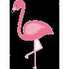 flamingo - Ilustracje -
