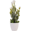 floor plants - Rastline -