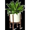 floor plants - Pflanzen -