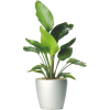 floor plants - Plants -