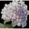 flor - 植物 -