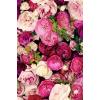 floral - Hintergründe -