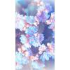floral - Background -