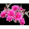 flores - Piante -
